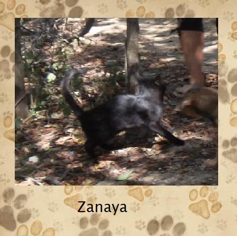 Zanaya